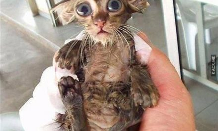 Sometimes, Animals Hate Taking Baths…And Sometimes, It's Just Too Cute