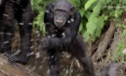 A Real Life 'Planet Of The Apes' Scenario Exists On Island In Africa