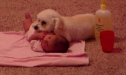 This Dog Didn't Hesitate To Protect His Baby Sister When He Sensed Danger