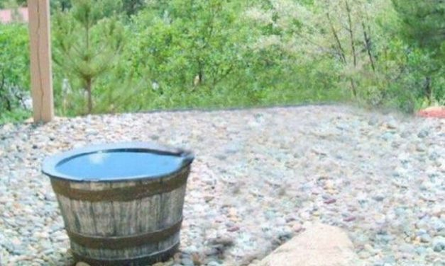This Family's Water Kept Going Missing… So They Set Up A Camera. You Gotta See What It Caught!