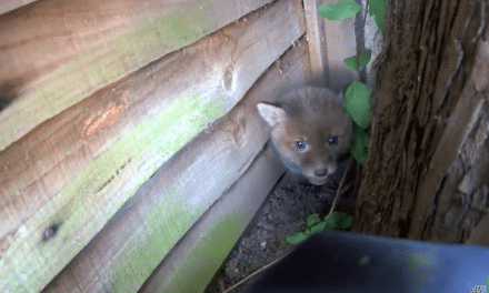 He Found The Cutest, Tiniest Little Creature Lost In Someone's Garden And Rescued It