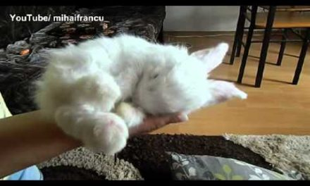 Baby Bunny Sleeping AWW