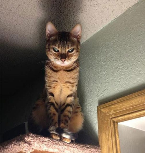 10 Hilarious Cats That Are The Epitome Of Drama