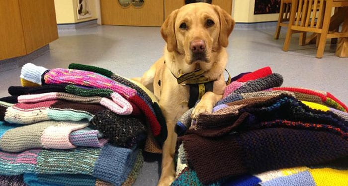 A Lady Made Blankets With Love For Our Fur Friends