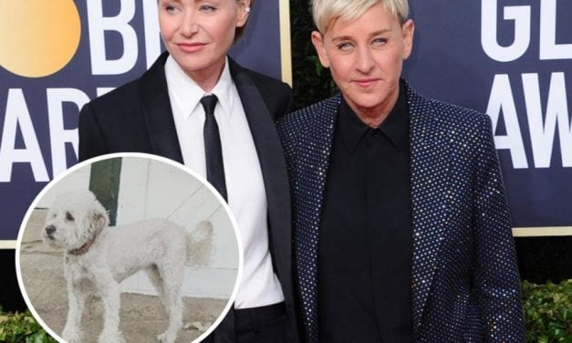 Ellen DeGeneres Reveals Her and Portia de Rossi's Canine Wolf Has Died — See Her Sweet Homage