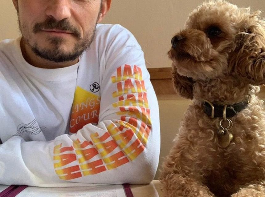 Orlando, florida Bloom Heartbroken And 'Powerless' Over Beloved Dog Mighty's Disappearance In Santa Barbara