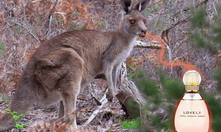 The Kangaroo Attacked An Aussie Jogger Because She Had been Wearing Sarah Jessica Parker's Perfume