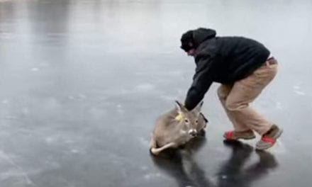Cheerful Christmas! Here's A Man Saving A Deer To Comfortable Your Frozen Coal Stack Of A Heart