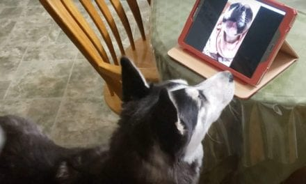 Open up Post: Hosted By Canine BFFs Jax And Birdie Reuniting In A Video Contact